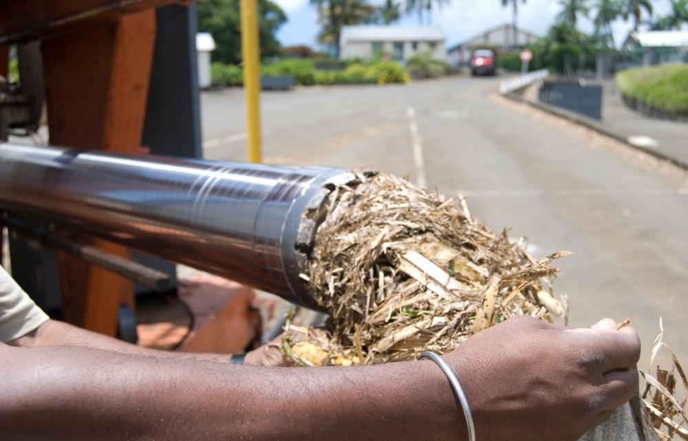 Sugar Cane Test